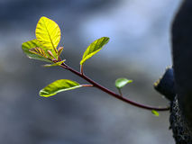 Shoot bud. A new bud just long Royalty Free Stock Images