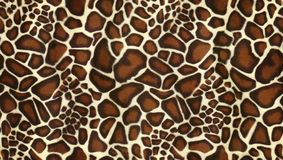 Camouflage background Texture. Shoot of the Camouflage background Texture royalty free stock photography