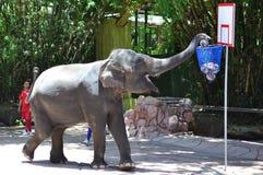 Shoot from elephant Royalty Free Stock Photo