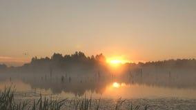 Misty morning sunrise on marsh. Shoot of misty morning sunrise on marsh stock video footage