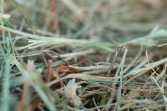 Shoot of a needle in a haystack. Nature metaphor Royalty Free Stock Photo