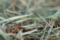 Shoot of a needle in a haystack. Nature metaphor Royalty Free Stock Photos