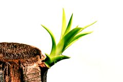 Shoot  of plant on white Stock Image