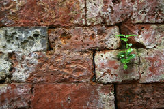 Shoot rising on brick Royalty Free Stock Photos