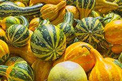 Colorful young pumpkins, at Feira Franca in Pontevedra royalty free stock photos