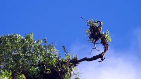 Shoot of tropical plant under the flowing cloud. Under the blue sky stock video footage