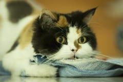 Shooting Cat Royalty Free Stock Photos