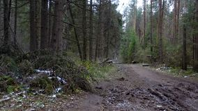 Shooting of fallen trees in the forest. In late autumn stock video