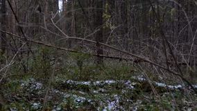 Shooting in the forest undergrowth. In late autumn stock video footage