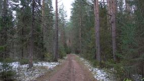 Frozen dirty road in the pine forest stock footage