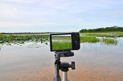 Shooting lotus pond with compact camera on tripod Stock Image