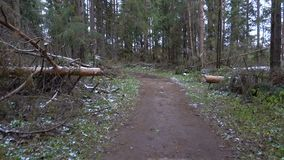 Shooting of muddy road in the pine forest stock footage