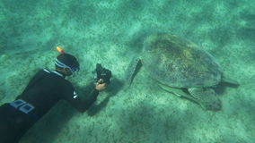 Shooting sea turtle underwater. Slow motion of diver photographer shooting big sea turtle with underwater camera. Some fish hiding under its shell stock video footage