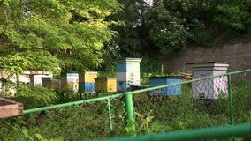 Shooting with the slider apiary in the spring garden. stock video footage