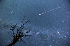 Shooting Stars Foto de Stock Royalty Free