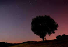 Shooting stars in night sky. Scenic view of shooting stars in night sky with tree silhouetted in foreground stock photography