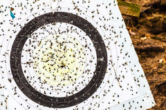 Shooting target and bullseye with many bullet holes Royalty Free Stock Photography