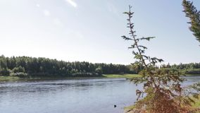 Shooting the valley of the Siberian river stock video