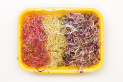 Shoots of alfalfa, radish and beetroot Stock Photos