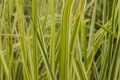 Shoots of grass in spring. Nature Royalty Free Stock Image
