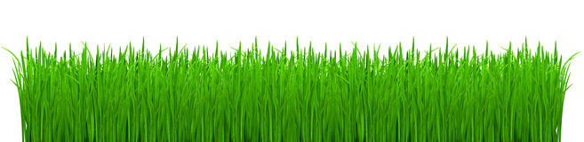 Shoots of green grass Stock Photos