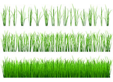Shoots of green grass Royalty Free Stock Photography