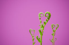 Shoots of ivy align to heart sign Royalty Free Stock Photos