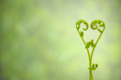 Shoots of ivy align to heart sign Stock Photo