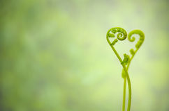 Shoots of ivy align to heart sign Royalty Free Stock Photo