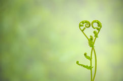 Shoots of ivy align to heart sign Royalty Free Stock Photography