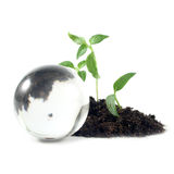 Shoots and sphere Stock Images