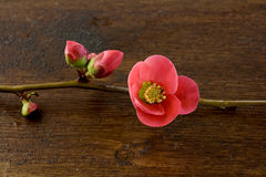 Shoots. Spring buds with blooming flowers Stock Photos