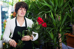 Shop assistant showing best roses stock photos