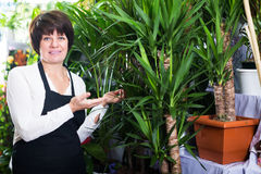 Shop assistant showing yucca trees Royalty Free Stock Photos