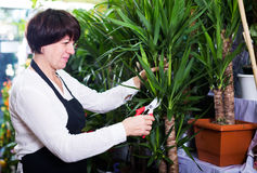 Shop assistant showing yucca trees Stock Photography