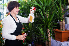 Shop assistant showing yucca trees Stock Image