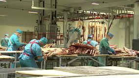 Shop for cutting carcasses of pigs and cows, workers cut the meat from the bones. The production of meat products stock video