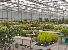 Shop for greenhouse cultivation and sale of indoor plants Royalty Free Stock Image