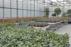 Shop for greenhouse cultivation and sale of indoor plants Royalty Free Stock Images