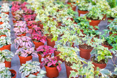 Shop of plants and flowers for selling in plant nursery Stock Photo