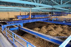 Shop with prepared potatoes at the starch factory. For feeding to the conveyor for recycling royalty free stock photography