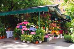 Shop on sale of flowers in the Italian city Stock Photos