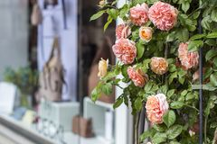 Shop windows and flowers in Zurich. Street photo royalty free stock photos