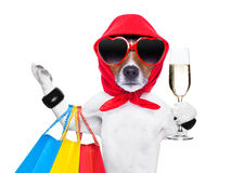 Shopaholic diva dog Stock Images
