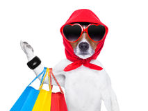 Shopaholic diva dog. Diva dog shopping like a pro , holding a bunch of bags royalty free stock photography