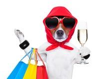 Shopaholic divahund Arkivbilder