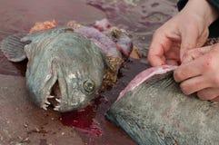 Shopped catfish Stock Image