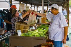 Shopper at the Salem Farmers Market royalty free stock images