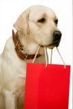 Shopping. Labrador (retriever). On a white background. Isolated Stock Photo