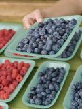 Shopping for berries at the farmer`s market Royalty Free Stock Photo